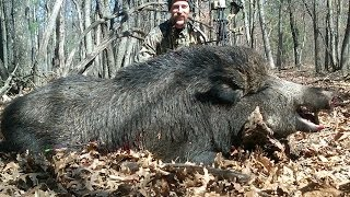 getlinkyoutube.com-400 pound Russian Boar Bow Hunt