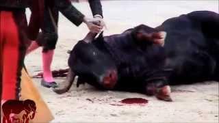 Dites non à la maltraitance animale