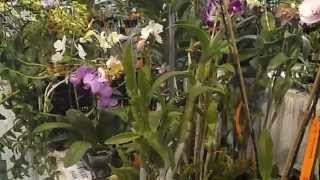 getlinkyoutube.com-Orchid Land Maui State Fair Plant Sale Part 1