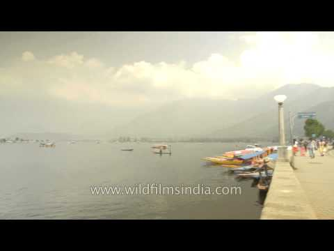 Dal lake and shikaras : textbook imagery of Srinagar