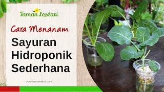 getlinkyoutube.com-Seri Hidroponik Sayuran: Fase Menanam