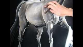 getlinkyoutube.com-Time Lapse Pastel Drawing of Perlino Stallion