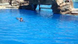 getlinkyoutube.com-Lady falls in Seaworld pool!