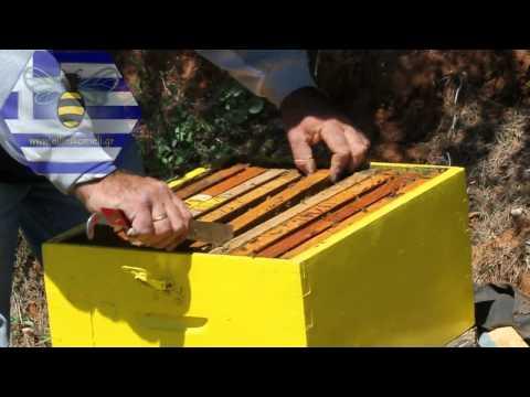 Επιθεώρηση διώροφου μελισσιού - Αναδιάταξη πλαισίων
