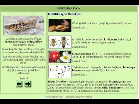 MUTASYON - MODİFİKASYON ( FEN BİLİMLERİ 8. SINIF KONU ANLATIMI)