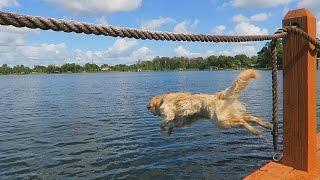 getlinkyoutube.com-JUMPING OFF THE DOCK!  (Super Cooper Sunday #34)