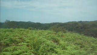 getlinkyoutube.com-Afrique: Le grenier des ressources naturelles
