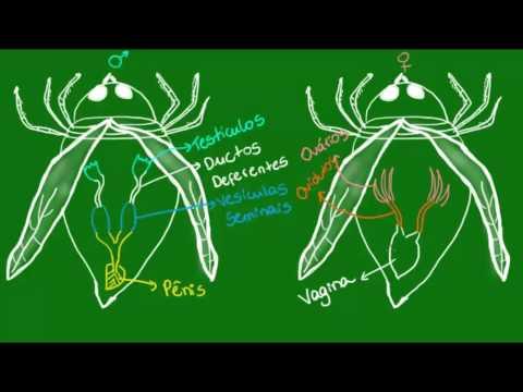 Reprodução dos insetos - Zoologia - Biologia