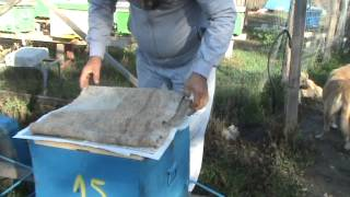 getlinkyoutube.com-Impachetarea pentru iernat a familiilor de albine