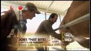 Ch.250 Nat Geo Wild HD - Feb14 Highlight