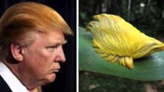 getlinkyoutube.com-Yo no se que le pasa a Donald Trump por Alexis Valdes.
