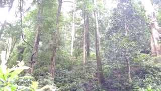 getlinkyoutube.com-Tiger forest area at Sabarimala