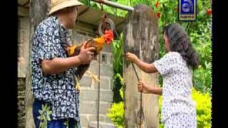 getlinkyoutube.com-Ketut Bimbo - Ngabut Keladi, Ayam Jago dari Bali (Rooster)