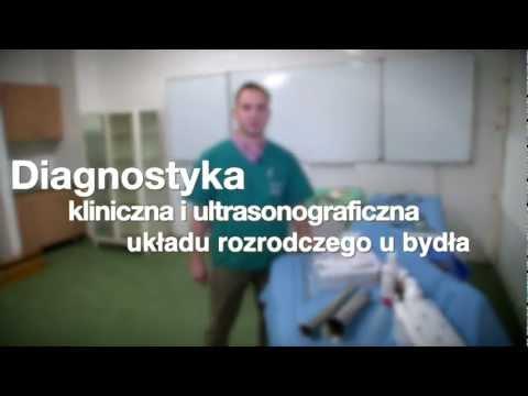 Diagnostyka kliniczna i ultrasonograficzna układu rozrodczego u bydła