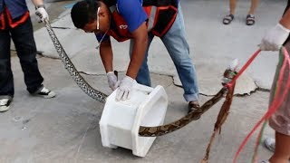 getlinkyoutube.com-11ft Python bites man's ORGAN while he sits on the toilet after it slithered up sewer pipes