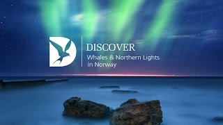 Whales & Northern Lights with Mark Carwardine