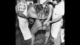 getlinkyoutube.com-Experimentos prohibidos en la ciencia y en humanos