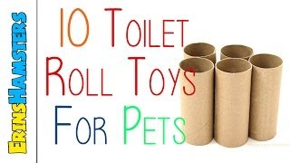 getlinkyoutube.com-10 TOILET ROLL TOYS FOR PETS