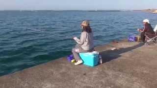 getlinkyoutube.com-釣りガール、波止からフカセ釣りでスマ(ソウダ)ガツオをゲット!
