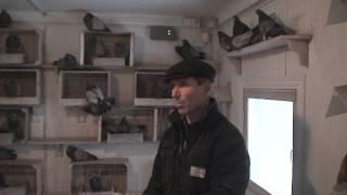 getlinkyoutube.com-Кировоградские высоколётные безкружные голуби