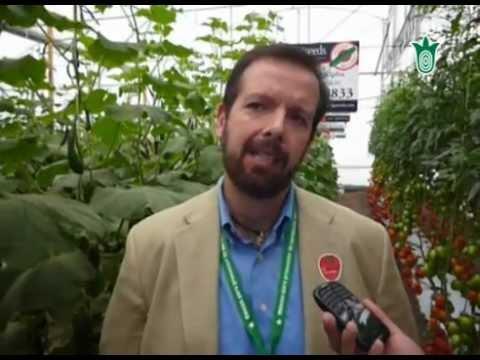 Génesis y desarrollo de los invernaderos en México (Imagen Agropecuaria)