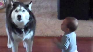 getlinkyoutube.com-Dog imitates baby