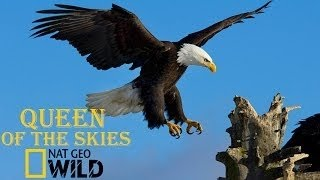 getlinkyoutube.com-Eagle Documentary National Geographic Full QUEEN OF THE SKIES