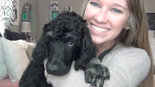 getlinkyoutube.com-New Puppy + Haul