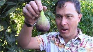 getlinkyoutube.com-Front Yard Summer Raised Bed Vegetable Garden Tour