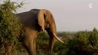 echo elephant amboseli - baby boom dans la plaine part1/3