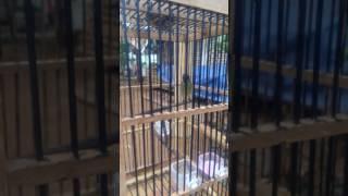 Mancing Kolibri Yang Malas Bunyi