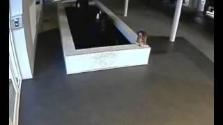 INPRESIONANTE ñiño apunto de se ahogado, es salvado por un angel.conparte el video.