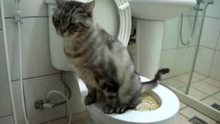 getlinkyoutube.com-「「cat toilet好神的貓砂盆省時 省力又省錢!!!」喵星人的功課