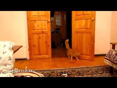 Коты пугаются видео приколы.