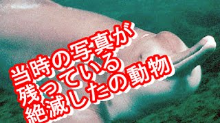 getlinkyoutube.com-【衝撃】当時の写真が残っている絶滅した動物/最凶の閲覧注意