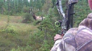 getlinkyoutube.com-The best archery shots on video, bowhunting - StuckNtheRut