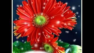 getlinkyoutube.com-پشتو ٹپے