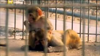 getlinkyoutube.com-L'enfant sauvage (documentaire ) (الطفل المتوحش ( وثائقي