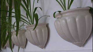 getlinkyoutube.com-Мои комнатные растения в интерьере - более 70 шт:)