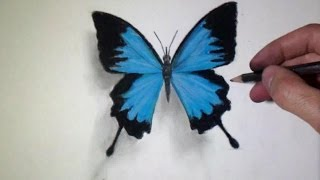 getlinkyoutube.com-How to draw a realistic Butterfly - Time Lapse