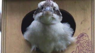 getlinkyoutube.com-Spike's Journey from egg to flight