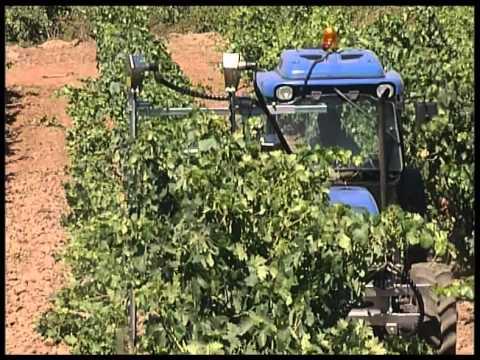 Prepoda en seco para cultivos en espaldera - Despuntadora doble sierra para la viña