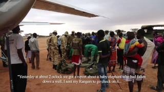 The Rescue of Orphaned Elephant, Murit