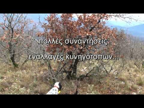 Κυνήγι μπεκάτσας-ΝΕΑ ΤΑΙΝΙΑ DVD ΚΥΚΛΟΦΟΡΕΙ 30 ΜΑΡΤΙΟΥ 2011