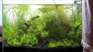 #12.有茎草のトリミング ~水草水槽の掃除方法~(Aquascape Trimming method)