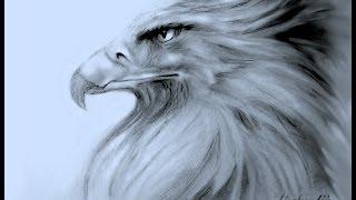 getlinkyoutube.com-Hoe teken je een Adelaar / dieren tekenen / #17