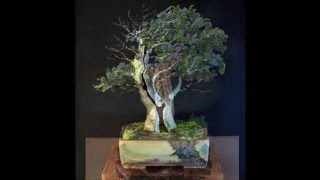 getlinkyoutube.com-Artistic Bonsai 盆景藝術