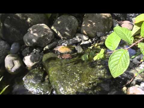 Bio Filtered Guppy Pond