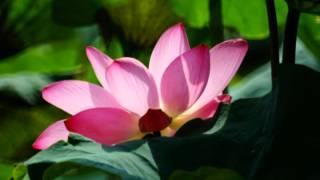 getlinkyoutube.com-我和我自己的影子-蔡琴-2014-台北植物園-02