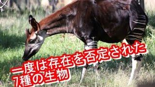 getlinkyoutube.com-【衝撃】一度は存在を否定された7種の生物/最凶の閲覧注意